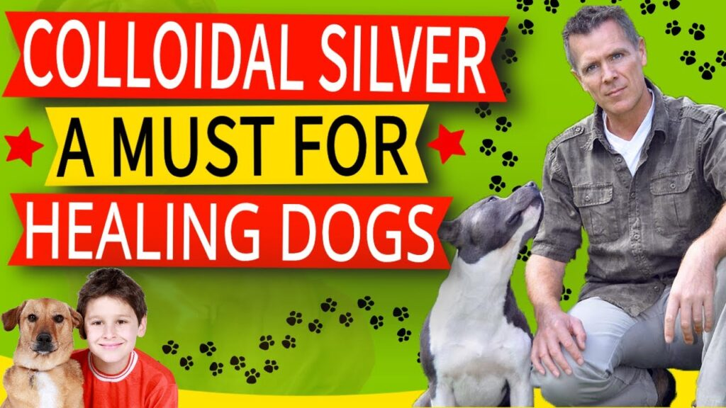22 Colloidal Silver Benefits For Dogs (How To Use And Best Option)