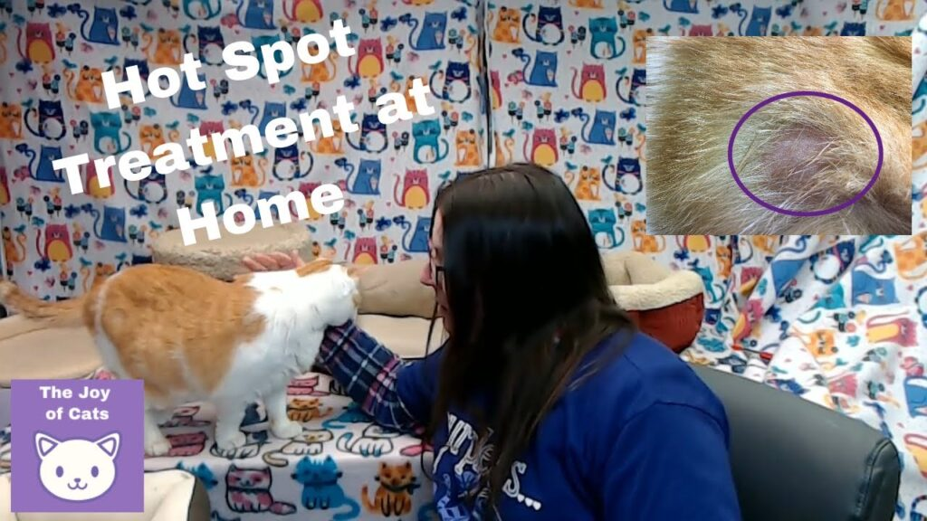 Cat Hot Spot Treatment at Home using colloidal silver