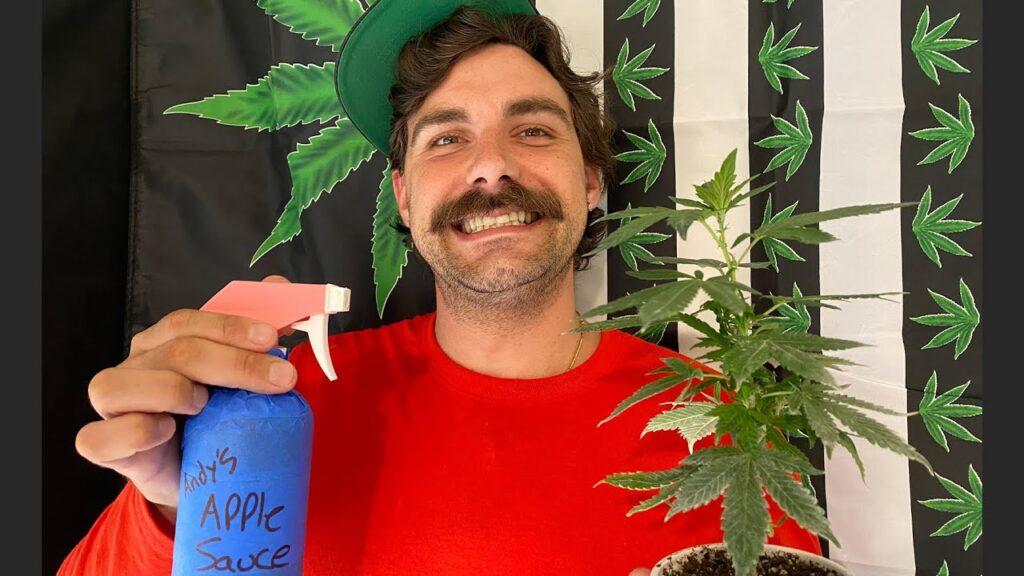 Colloidal Silver to Feminize Pollen / Make Your Own Feminized Cannabis Seeds