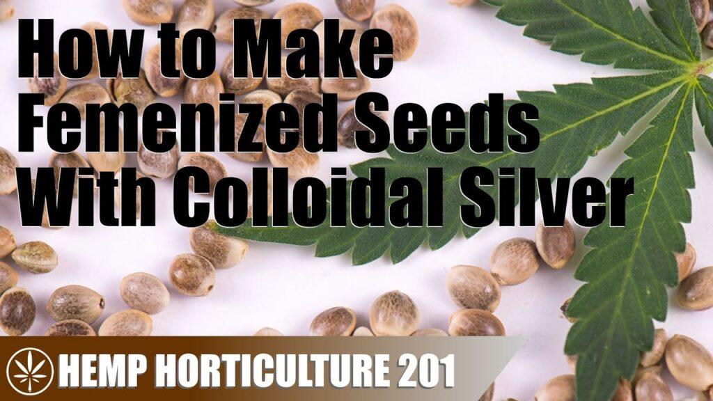 Making Femenized Hemp Seeds With Colloidal Silver