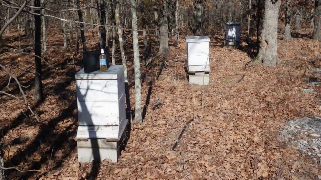 Treating Bee Hives for Nosema With Smart Colloidal Silver